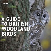 Lydbok - A Guide To British Woodland Birds-Stephen Moss